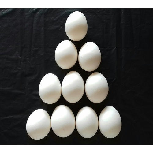 Poultry Egg and Brown Egg Wholesale Trader | Baba Eggs, Nagpur