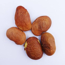 Natural Brown Pongamia Seed, For Plantation