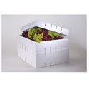 EPS Grape Boxes