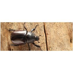 Beetle Control Service