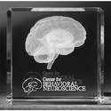 3D Crystal Engraved Human Brain Cube