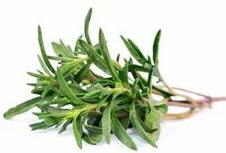 Thyme Leaves T Cut