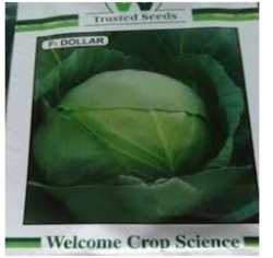 Dollar Cabbage Seeds, Packaging: 10 gm