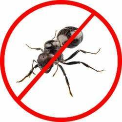 Ants Control Service