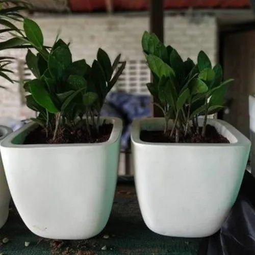 White Square Ceramic Flower Pot, for Exterior Decor
