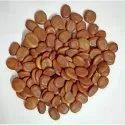 Albizia Lebbeck Seed