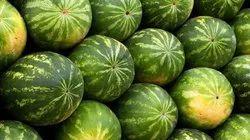 BIL Sugarking Water Melon, Packaging Size: 5 Kg