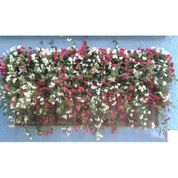 Wall Mount Flower Decoration Services