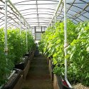 Greenhouse Structure Services