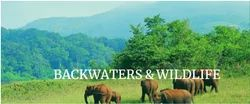 Backwaters And Wildlife Tour Package Service