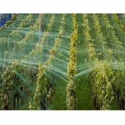 Agriculture Bird Protection Net