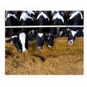 Organic Cow Feed