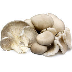 Organic Mashrooms | Manufacturer from Guwahati