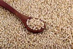 Sorghum Seeds, Packaging Type: Pp Bag, Packaging Size: 25 Kg