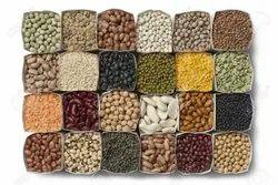 Kidney Beans, High in Protein