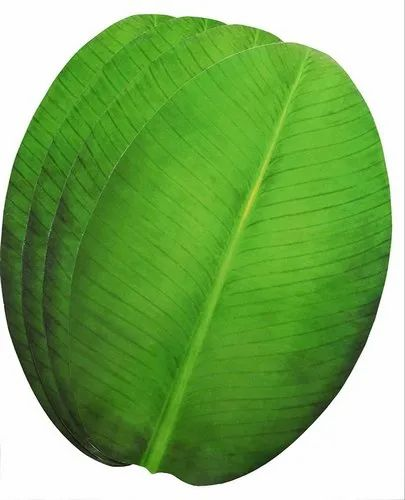 Green Paper Banana Leaf, For Disposable Plate