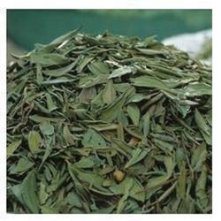 Mehandi & Lawsonia Nigrum/heena leaf