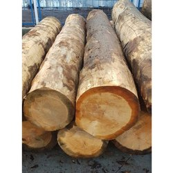 OPS International 6-12 feet Sal Wood Log, 12-15 %, Thickness: 30-50 Inch