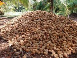 Semi Husk Pollachi Nature Coconut