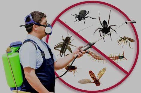 Image result for pest control service