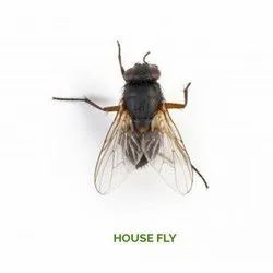 Industrial House Flies Control Services in Pan India