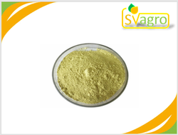 Rutin Extract Powder