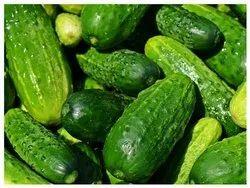 A Grade Fresh Green Cucumber, Crate, 20 Kg