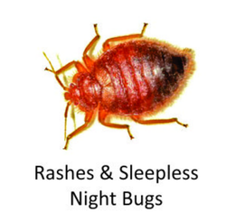 Bed Bug Eradication Service