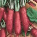 Hybrid Pink Radish Seeds, Packaging Type: Packet, Packaging Size: 100g