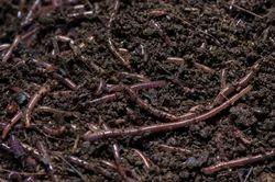 Organic Vermi Compost