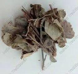 Shalaparni/Sal Leaved Desmodium/ Desmodium Gangeticum