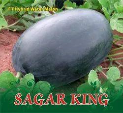Sagar King F-1 Hybrid Watermelon Seeds