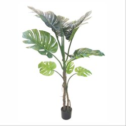 Gh/T-31 Plant