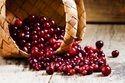Craneberry Extract