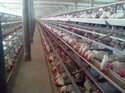 Comfort Layer Poultry Cage