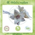 Gift Pack White Ecofriendly Flower, One