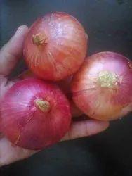 Onion in Thiruvananthapuram - Latest Price & Mandi Rates