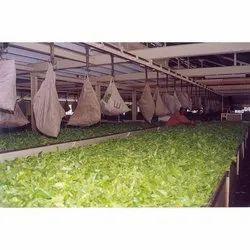 Overhead Conveyors for Tea Industries