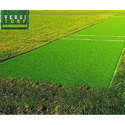 Artificial Turf Cricket Pitch