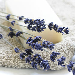 Fabulous Lavender  Water Soluable Fragrance