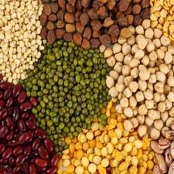 Cold Storage Facility for Indian Pulses