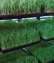 Fully Automated All Weather Hydroponic Fodder Machine