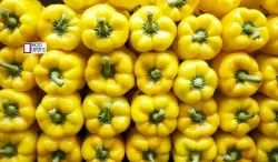 NIKOSI A Grade FRESH YELLOW CAPCICUM, Packaging Size: 10 Kg, for Cooking