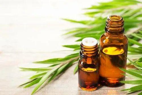 Naturalshifa Tea Tree Essential Oil, Rs 2300 /kilogram Natural ...