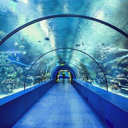 Tunnel Aquarium
