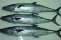 Vanchiram Sea Foods