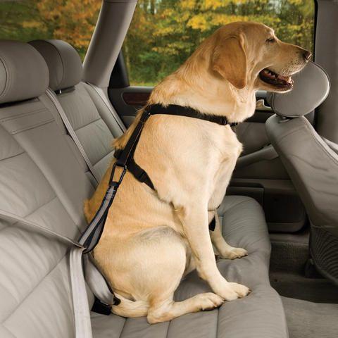 Dog Belts