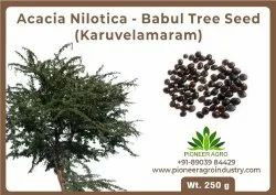 BOKASHI BRAN Natural Acacia Nilotica Seeds(Karuvelam tree) seeds 250G, For Agriculture, Packaging Size: 14x14x18