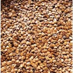 Dried Purple Brinjal Seed, For Agriculture, Packaging Size: 1 kg-5 Kg
