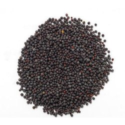 Hybrid Black, Yellow Black Mustard Seed, for Cooking and Farming, Packaging Size: 60 Kg